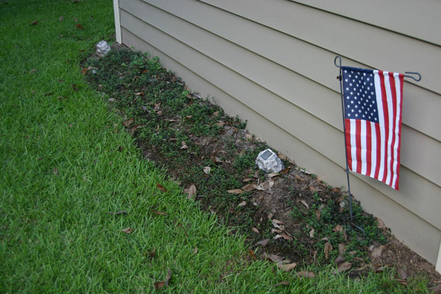 green grass flower bed with dying plant and American flag