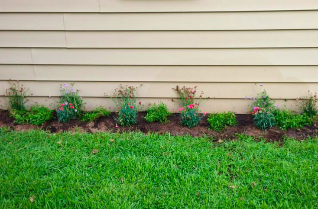 carnations and other flowering plants in new flower bed against vinyl siding