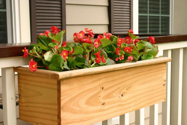 red begonias in window planter box